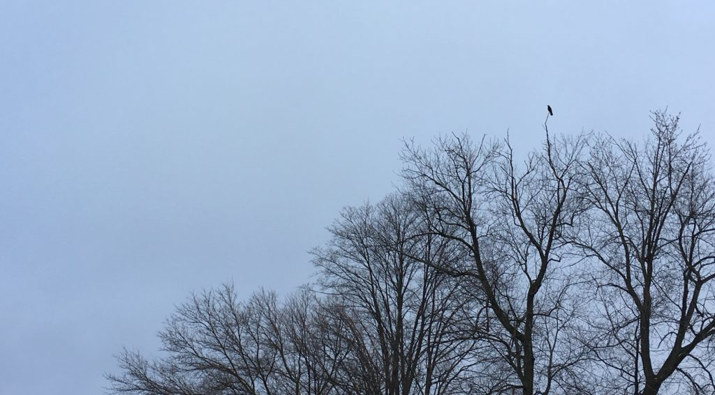 A bird sits along high atop a tree on a cold, wintry day, a beacon of strength.